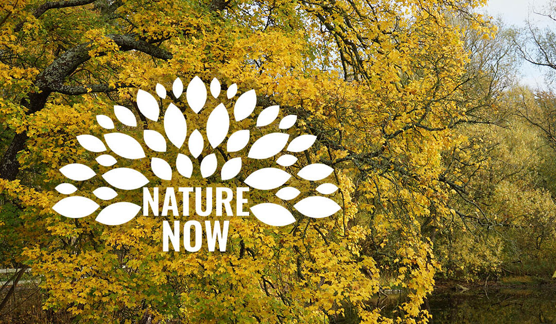 Nature Now 2 week course